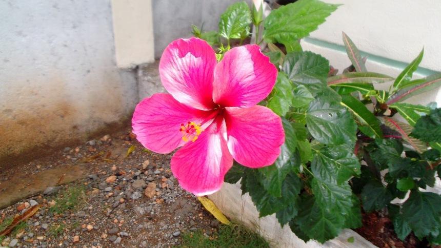 cf6d8-flowersandmoro002