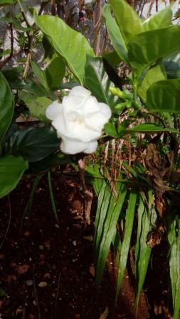 blossom6-pjs